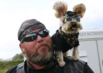Biker and his Dog