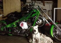Chopper and Dog | Motorcycle